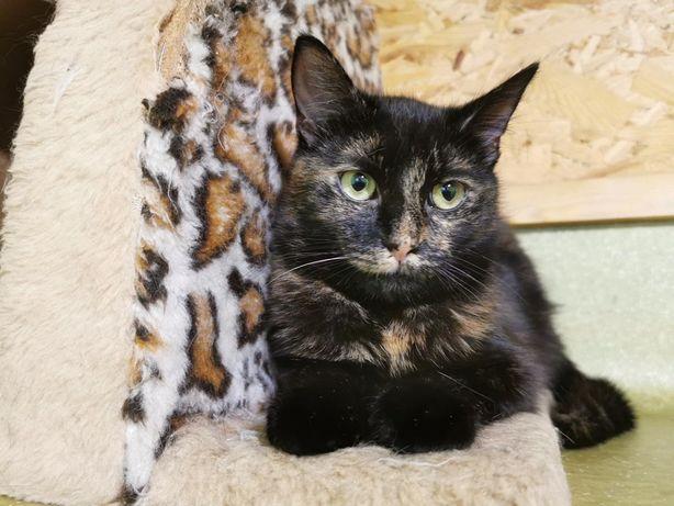 Котенок кошка стерилизована черепаховая девочка бесплатно черепашка