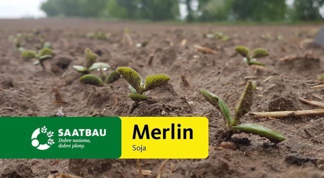 Soja NON GMO nasiona Merlin Regina Abelina Aurelina Bettina