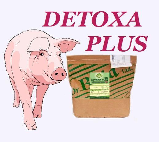 Na mikotoksyny w paszy DETOXA PLUS dla trzody - pozbądź się problemu!