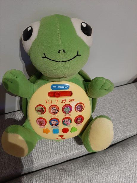 Żółwik Albert stan bardzo dobry
