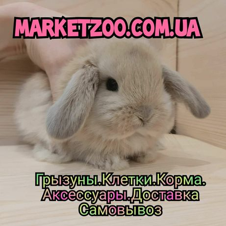 Карликовые миниатюрные декорат.торчеухие и вислоухие кролики и клетки