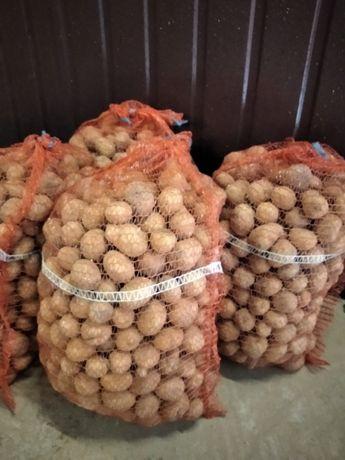 ziemniaki drobne odpadowe