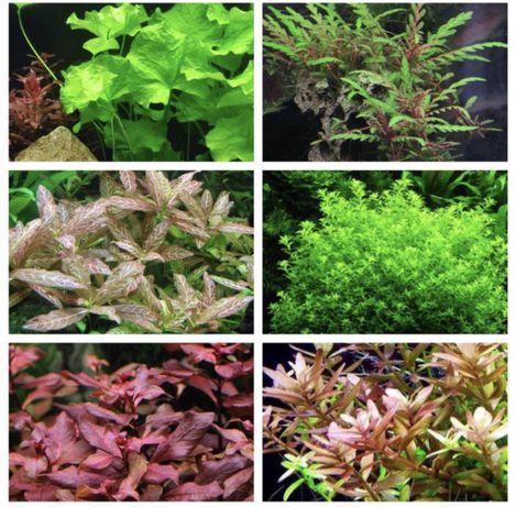 Podas de plantas de aquário - para despachar