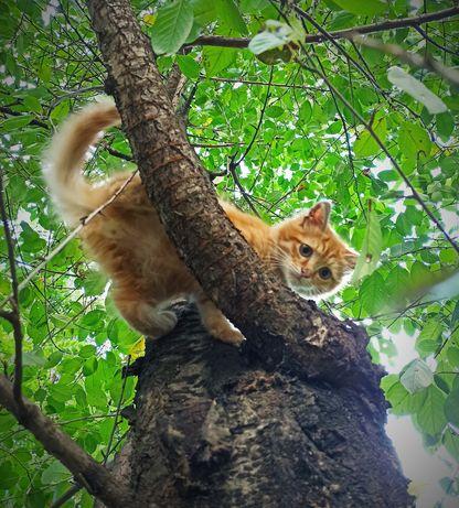 Котик Гарфілд в пошуках дому