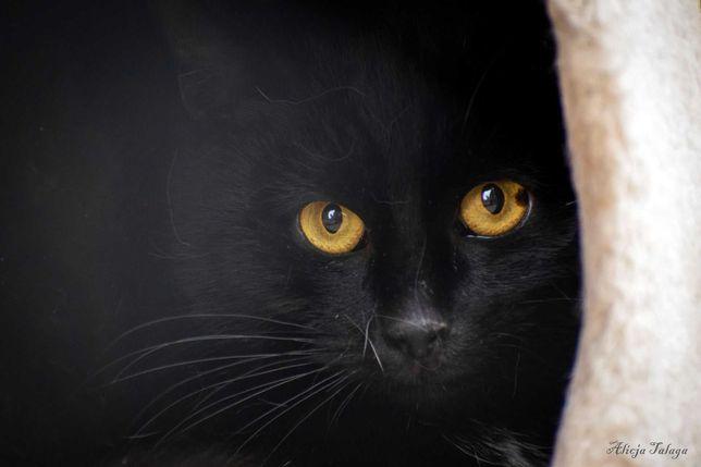 Czy czarny kot felv + ma szansę na adopcję?