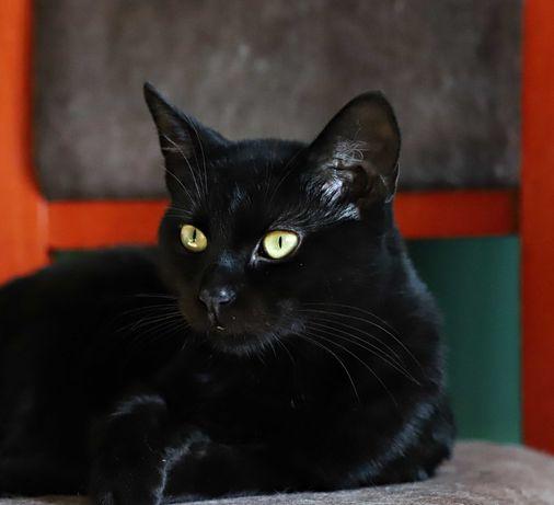 Czarna Puma czeka na swój DOM