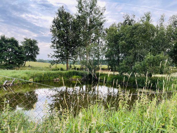 Działka z własnym stawem Rzepowo 100m rzeka Drawa, 300m jezioro