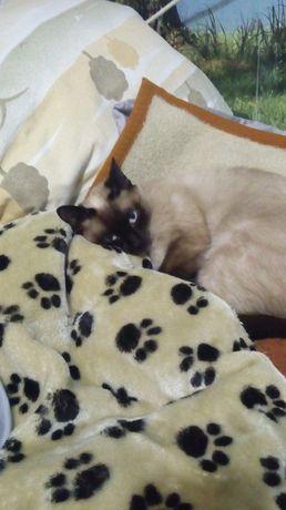 Ищем котика для вязки