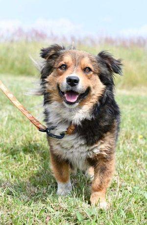 Łazy/ Chruszczobród znaleziono psa! Szukamy właściciela!