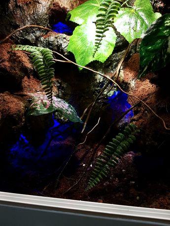 Nowe terrarium dla gekona orzęsionego. Pełen zestaw.
