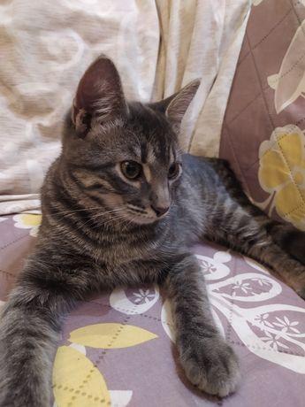 Котик 4 месяца ищет любящих хозяев