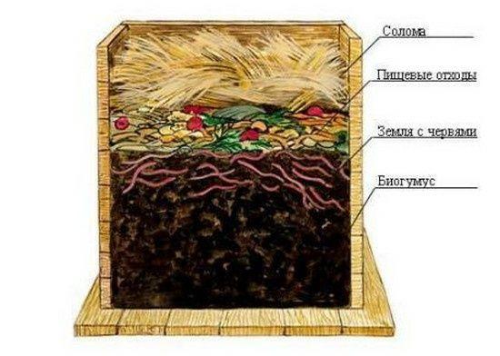 Каліфорнійський черв'як для компосту, консультація