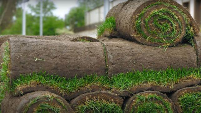 Трава рулонная – газон выносливый, Спортивный + Автополив газона