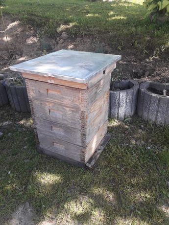 Ul Wielkopolski ule pszczoły miód