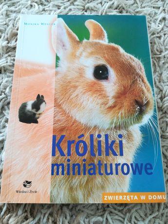 Kroliki miniaturowe poradnik o krolikach