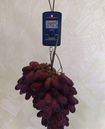 Новинки. Саженцы винограда