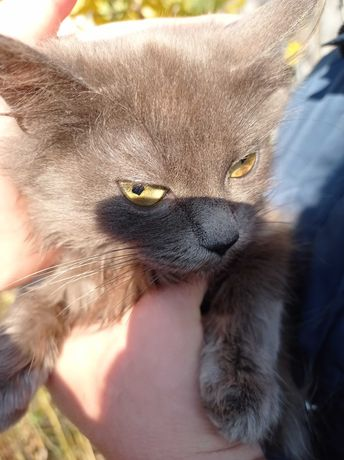 Котенок-девочка 4,5 месяца