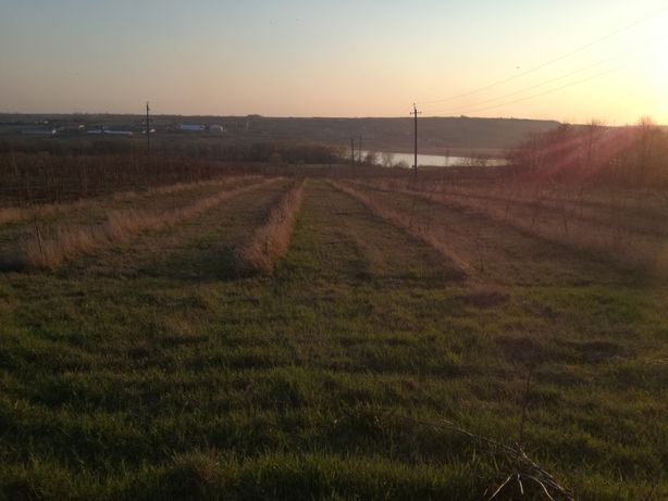 Продам земельну ділянку(Сад)