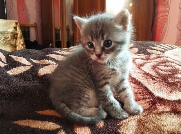 Подарую гарне кошеня