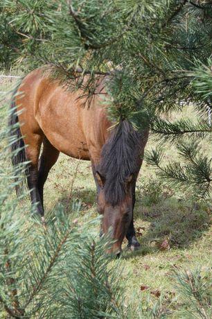 Boks, stajnia, pensjonat dla konia - śląsk