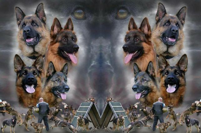 Тренировочная база для собак