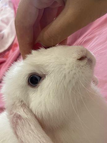 СРОЧНО Декоротивный кролик