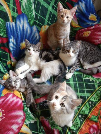 Отдам котят , кошку и подростков в хорошие руки.