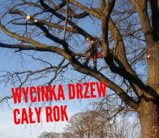 """Wycinka drzew, przycinanie gałęzi, """"ALPINISTYCZNIE"""" Rybnik, Żory +30km"""
