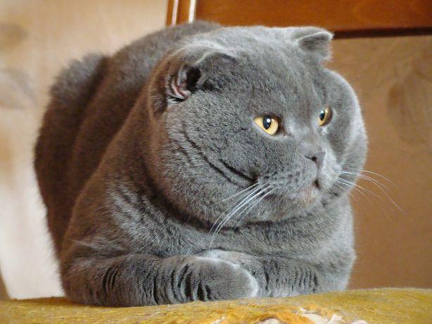 Приглашает на ВЯЗКУ Шотландские коты ,