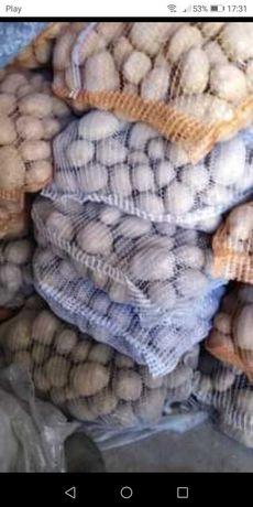 Ziemniaki  białe, żółte  Michalina Ricardo, asterix,irga,irys,catania