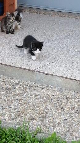 Gatos Adoção gatinhos