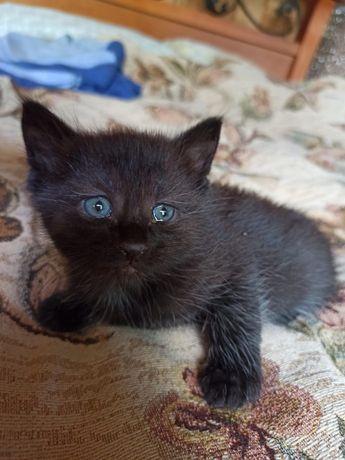 Чудесные котята, девочки и мальчики