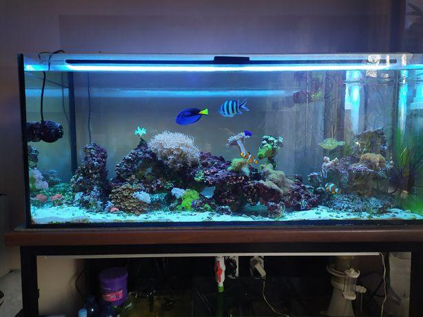 Akwarium morskie 120x50x50 300l