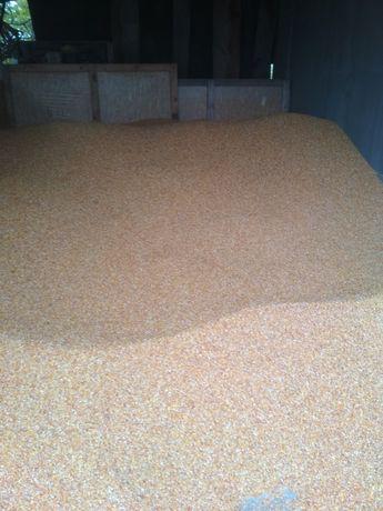 Продам кукурудзу 7000 тонна