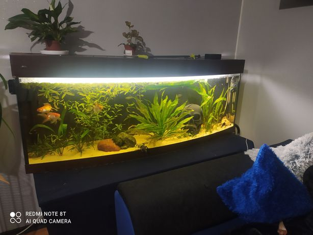 Akwarium wromak 240l panorama