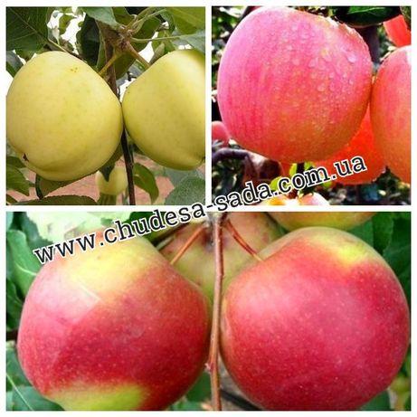 Саженцы яблони более 70 новых сортов опт и розница. Доставка, качество
