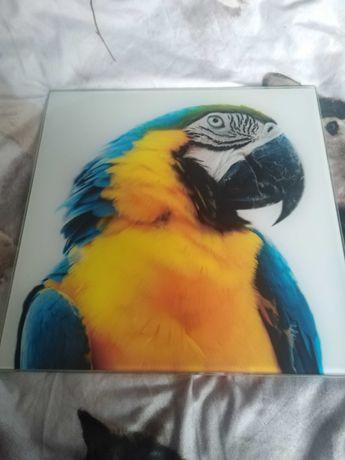 Obraz szklany Papuga