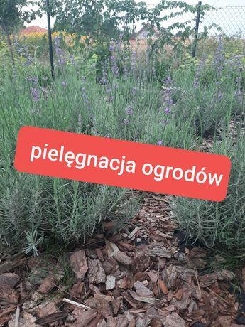 Ogrodnik, prace ogrodnicze