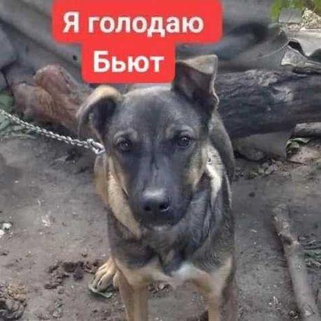 Собаку бьет хозяйка, помогите спастию