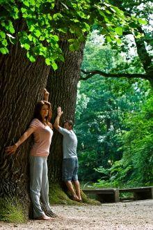 """Книга """"Дендротерапия - лечение деревьями"""". (Биолокация)."""