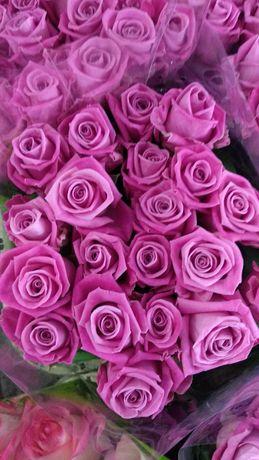 Роза с оптового склада