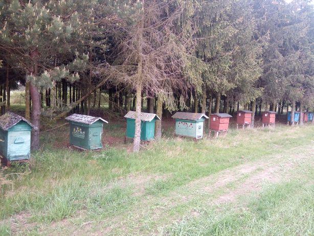 Ule pszczele warszawskie poszerzane 9szt bez pszczół