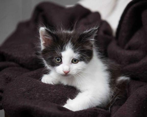 отдам котенка, мальчик, 2 месяца