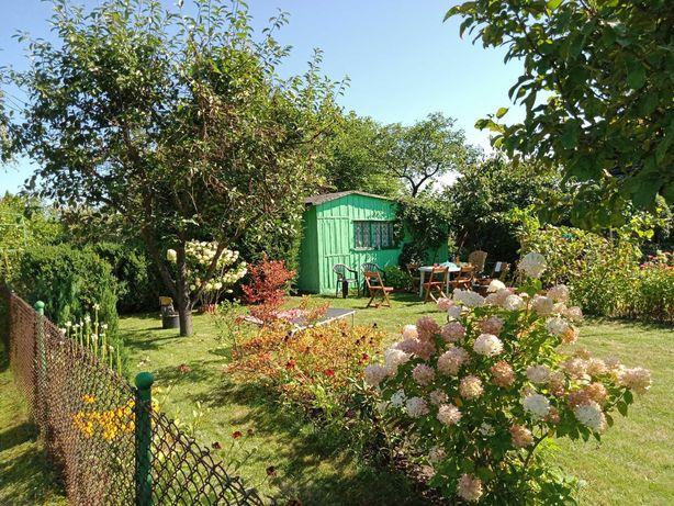 Działka ROD w ogrodzie RELAKS w Bełchatowie