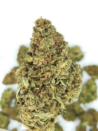 Susz CBD Mimosa Skunk 16,5% CBD 0,2% thc Legalna super jakosc 50 gr