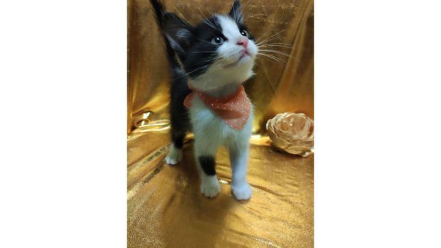 Котенок Тишка ищет дом. 1 месяц