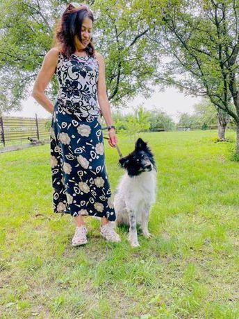 Молодой мелкий пёсик/собака красавчик (2-4 годика) добрый