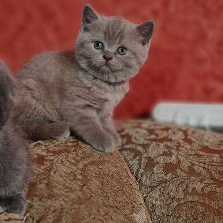 Котята лиловые плюшевые