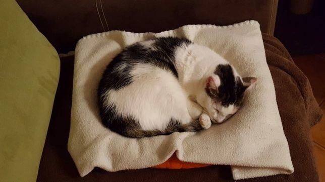 Kaja, milutka koteczka szuka domu !!!