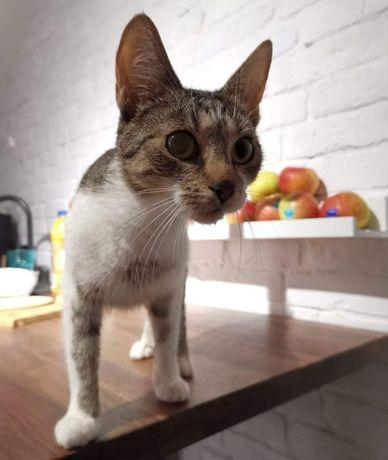 Cudna kotka Demeter do adopcji